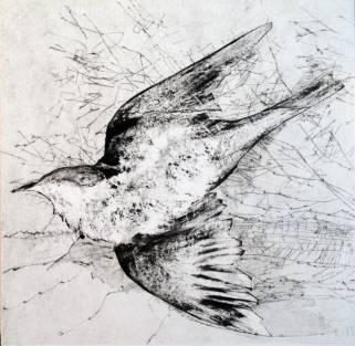 oiseau-ii