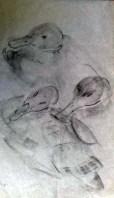etudes canard