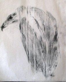 vautour moine IV