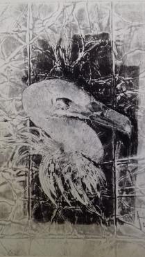 portrait vautour fauve I