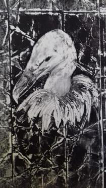 portrait vautour fauve III