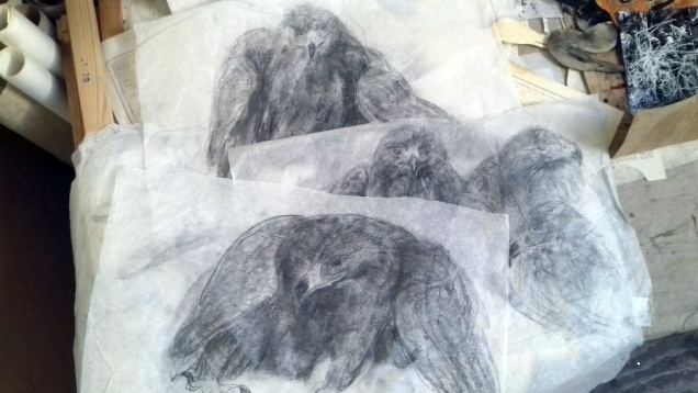 Drawings golden eagle